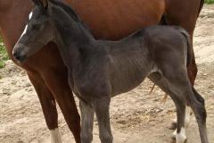 barnaby-foal-2