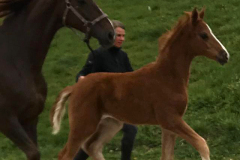 barnaby-foal-4