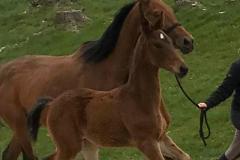 barnaby-foal-5